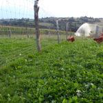 Un système d'irrigation assez exceptionnel !